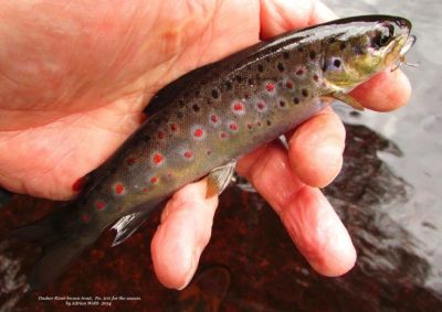 Trout #100 for the Season
