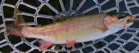 rainbows-in-the-mersey-e