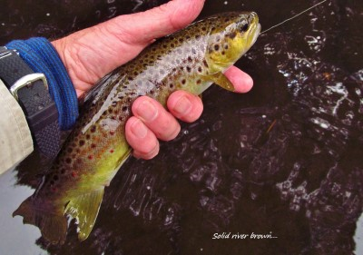 2016 02 25 Solid river brown