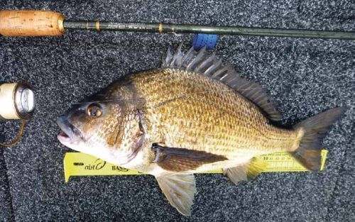 101 bream big fish